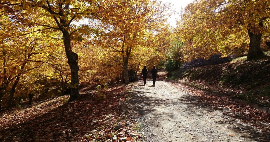 senderismo en el valle del genal en otoño 1