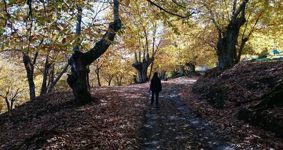 senderismo en el valle del genal en otoño 2