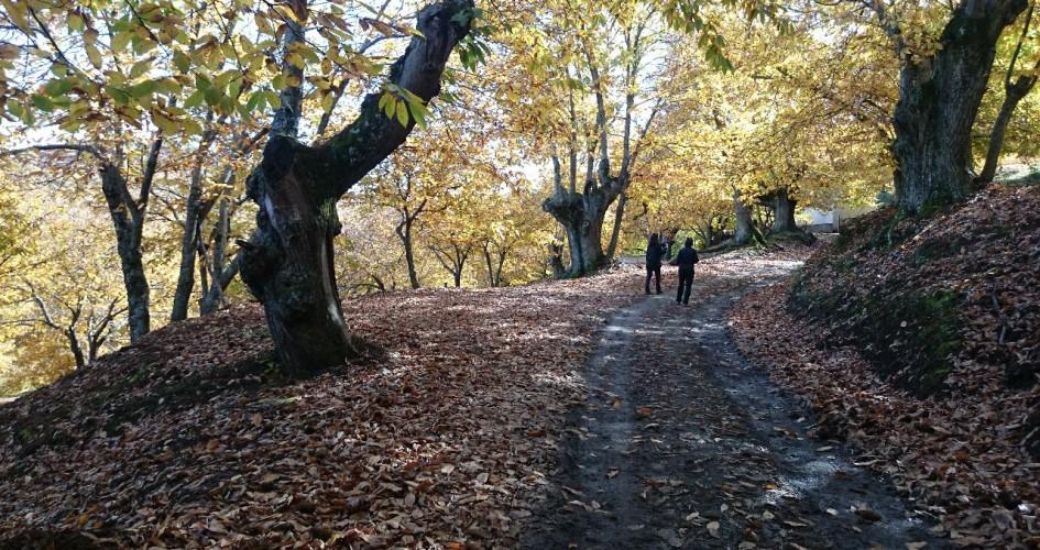 senderismo en el valle del genal en otoño 3