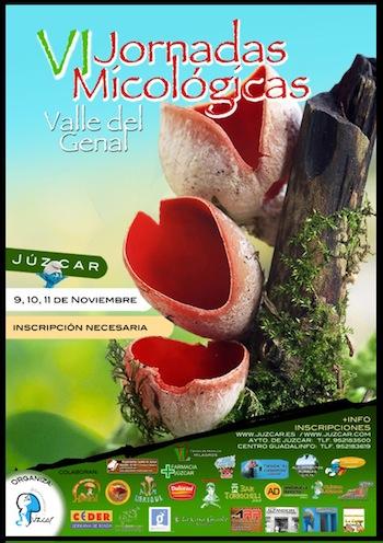 setas genal. setas juzcar, jornadas micologicas de juzcar