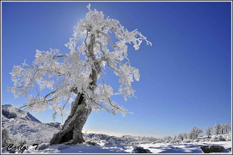 Sierra de las Nieves parque nacional quejigos-11